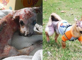 perro quemado con agua hirviendo por morder un celular