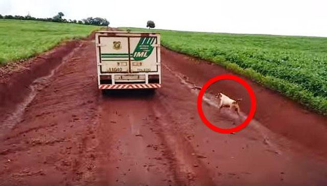 perros no se alejan de su humano aún después de muerto