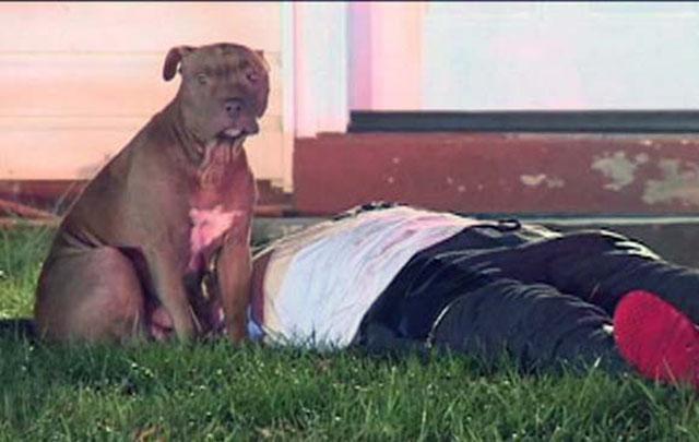 pit bull protegió a su familia en un incendio