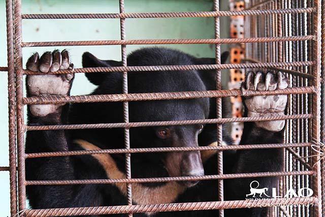 rescatan a un oso en una redada contra las drogas