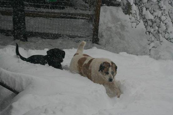Khaleesi es feliz en la nieve