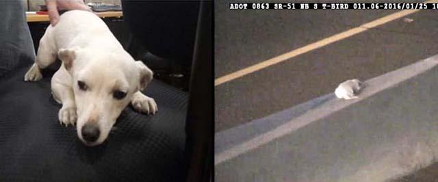 Se lanza al tráfico para salvar a un perro