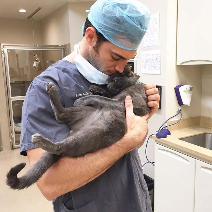 Veterinario abraza a un gato
