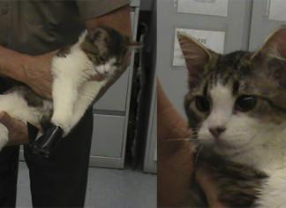 atan a un gato con cinta aislante