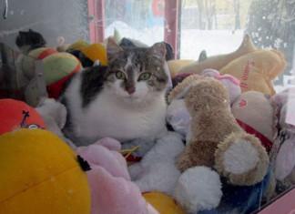 gato se refugia del frío en una máquina expendedora de juguetes