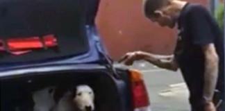 grabación logra salvar la vida de un perro