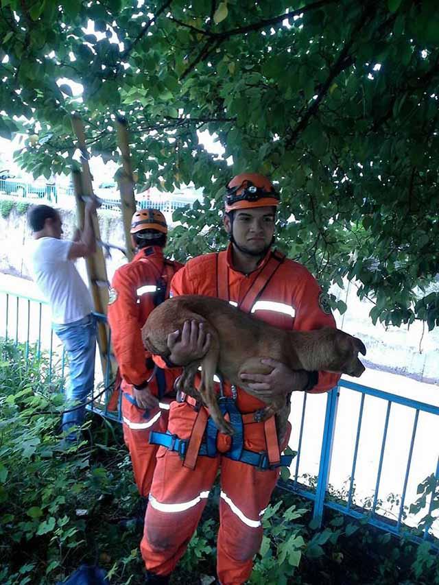 heroico rescate de dos perros atrapados en un canal