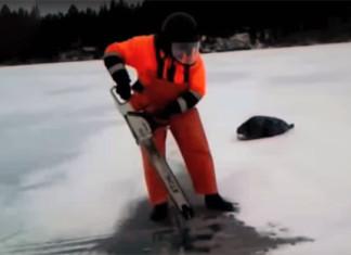 hombre salva a una foca