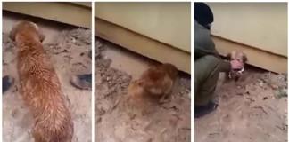 perra arriesga su vida para salvar a sus cachorros
