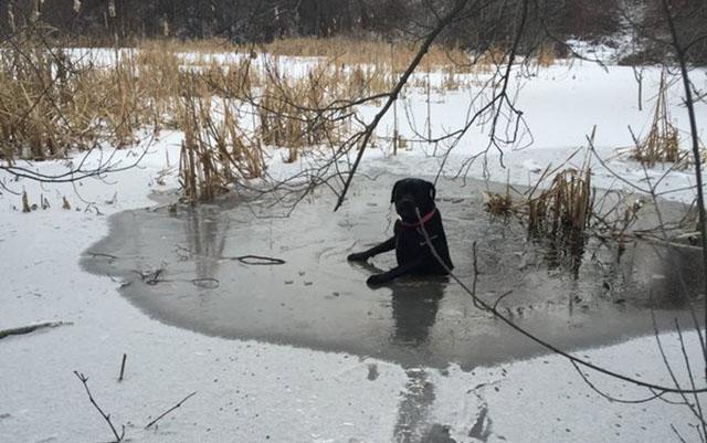 perra se aferra a una fina capa de hielo