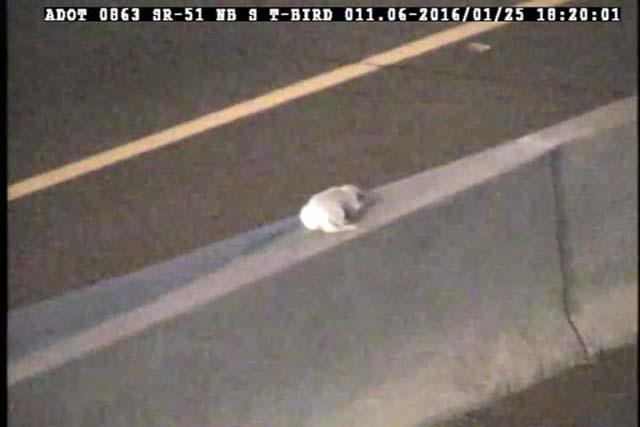 perro en medio de la autopista
