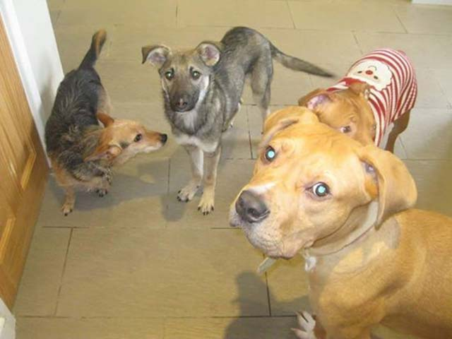 perro tenía miedo de las caricias