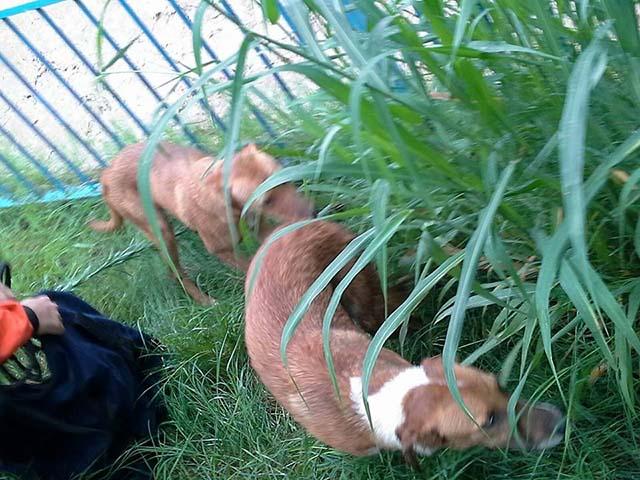 perros rescatados de un canal