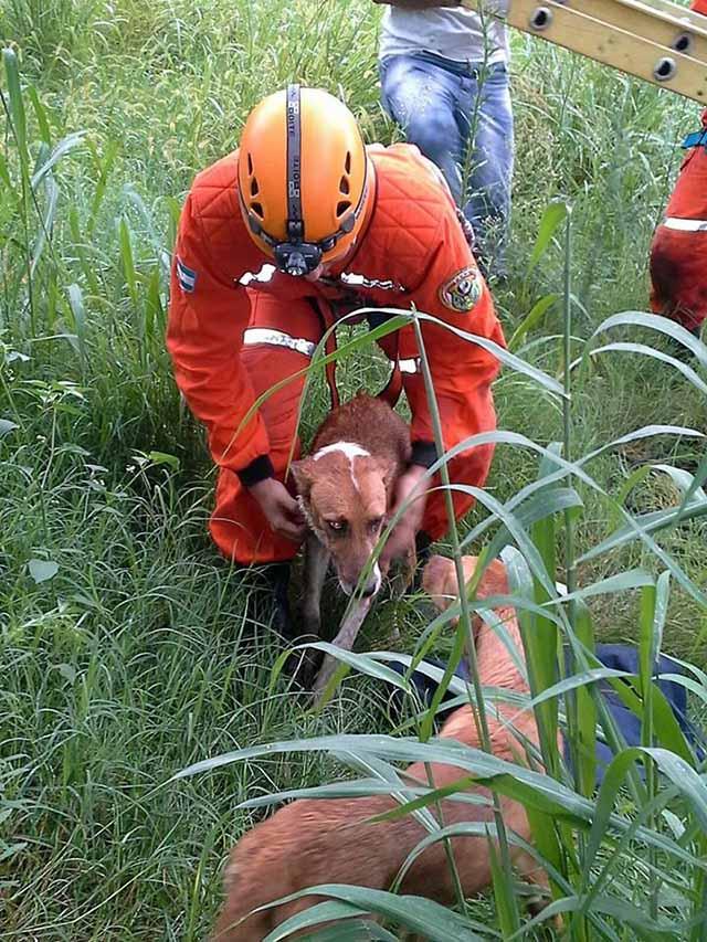 perros rescatados del canal Camino del Perú