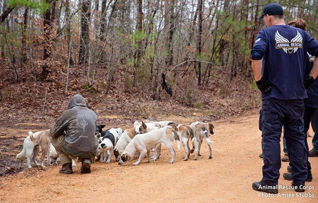 perros rescatados en el bosque