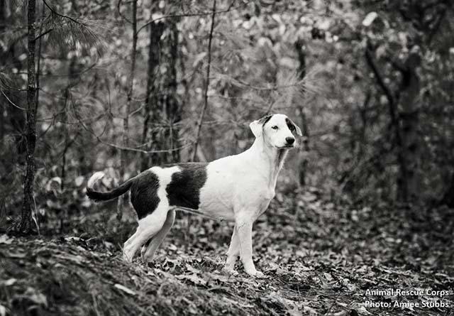 perros rescatados vivían en el bosque