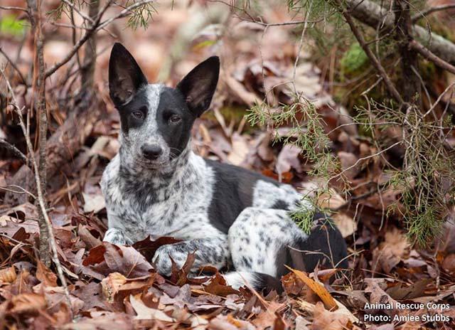 perros vivían con hombre al aire libre en el bosque