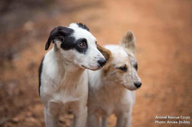 perros vivían con un hombre en la naturaleza