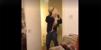 pit bull enloquece cuando su humano vuelve a casa