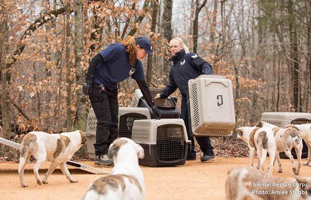 Rescatan 31 perros que vivían con un hombre en el bosque