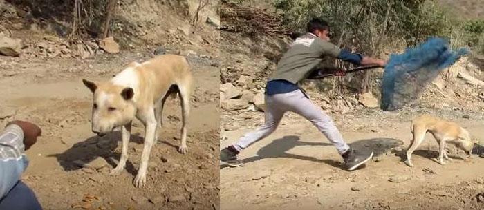 rescatan perro con la cara muy hinchada