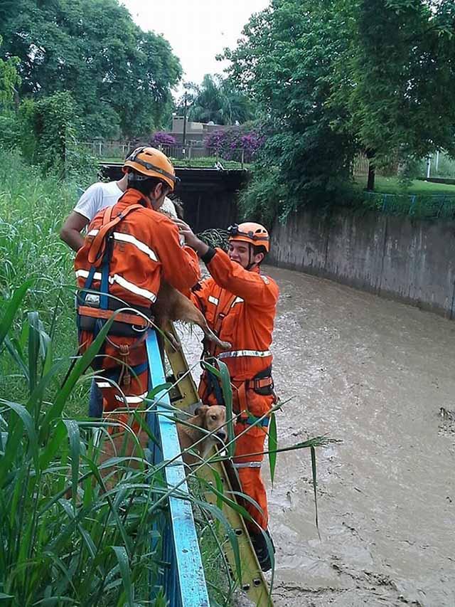rescatan perros en canal