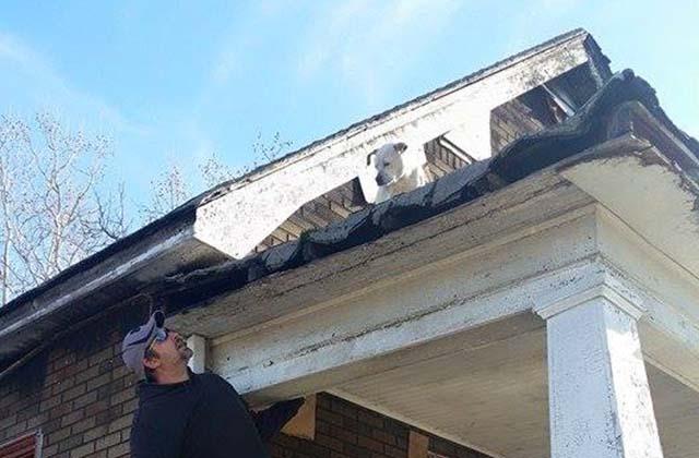 rescatan pit bull que vivía en casa quemada
