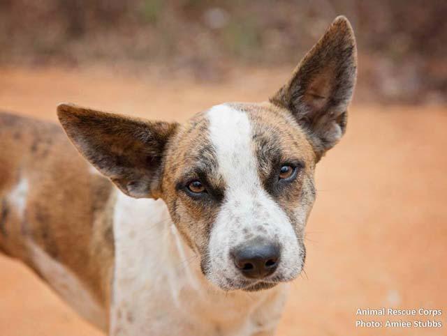 rescate de perros que vivían en el bosque