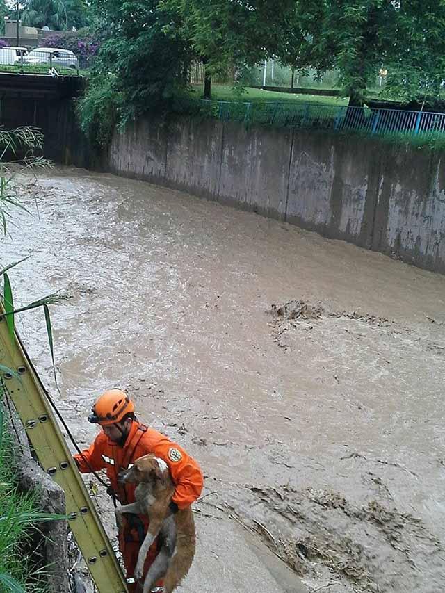 uno de los perros rescatados en un canal