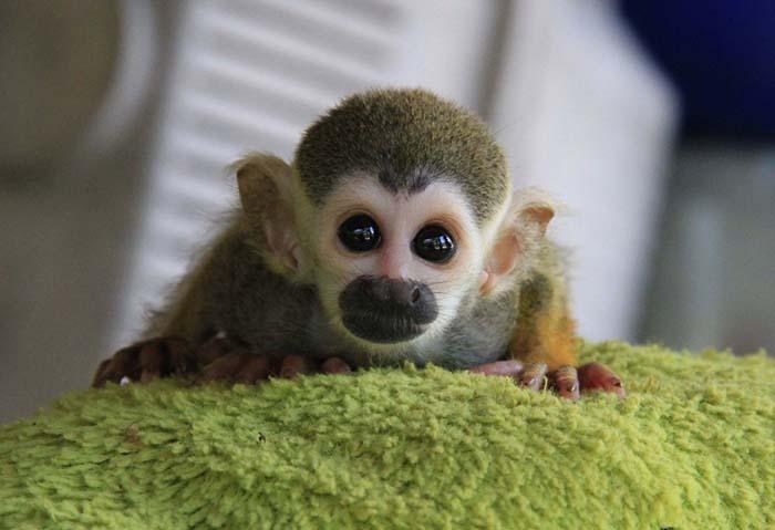 Mono bebé huérfano