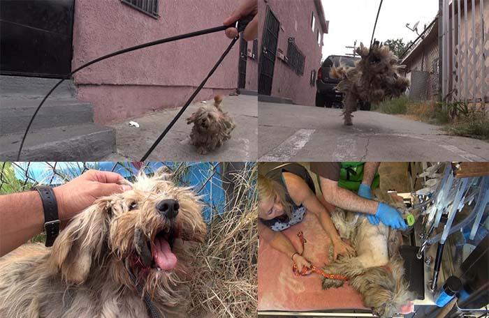 Benji, perro callejero asustado