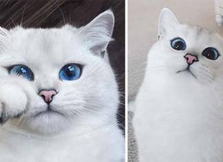 gato tiene los ojos azules