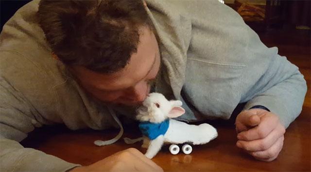 Conejo paralítico se desplaza con monopatín
