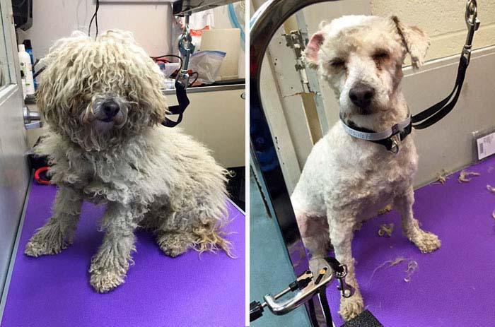 Corta el pelo gratis a perros
