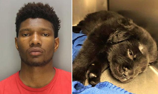 Detienen a responsables de disparar a un cachorro 18 veces
