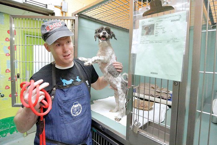 Este hombre corta el pelo gratis a los perros del refugio