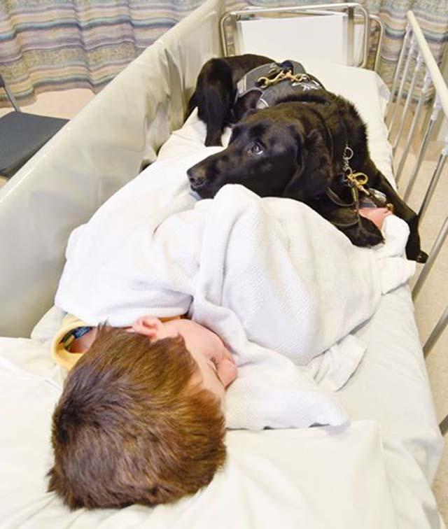 Niño con autismo y perro de asistencia
