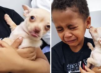 Niño conoce a un perro Chihuahua