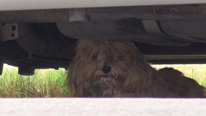 Perro callejero temía ser rescatado