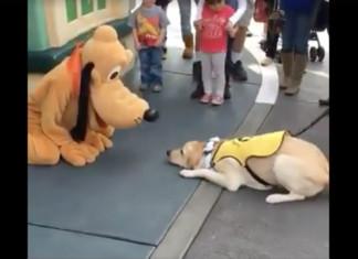 Perro conoce a Pluto