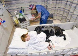 Perro de asistencia no deja solo a niño con autismo