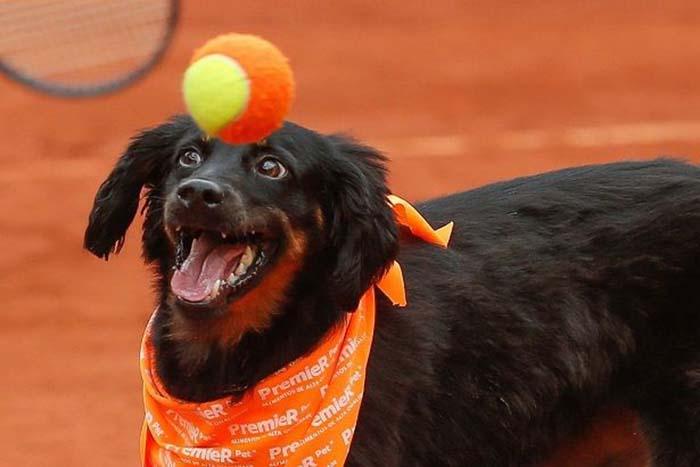 Perro en el abierto de tenis