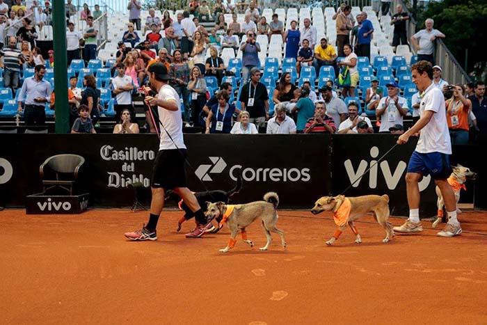 Perros recogepelotas en el abierto de Sao Paulo