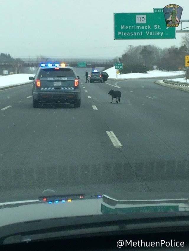 Policías detienen el tráfico por un perro
