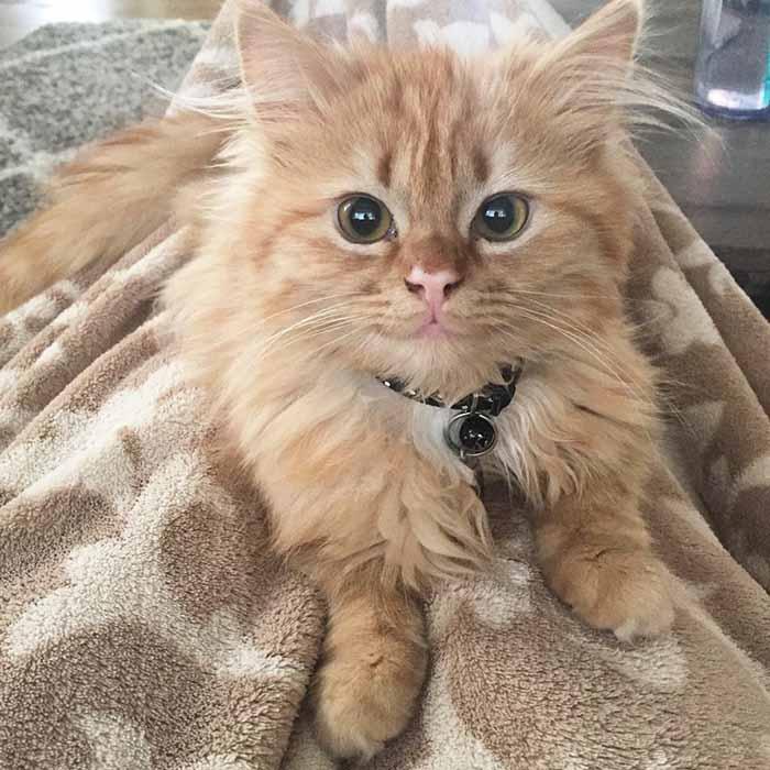 Rey, la gata feliz