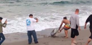 Sacan a un tiburón del mar para tomarse fotos
