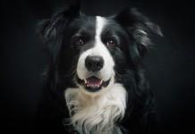 Socialización canina