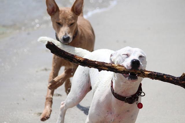 Trucos para socializar a tu perro