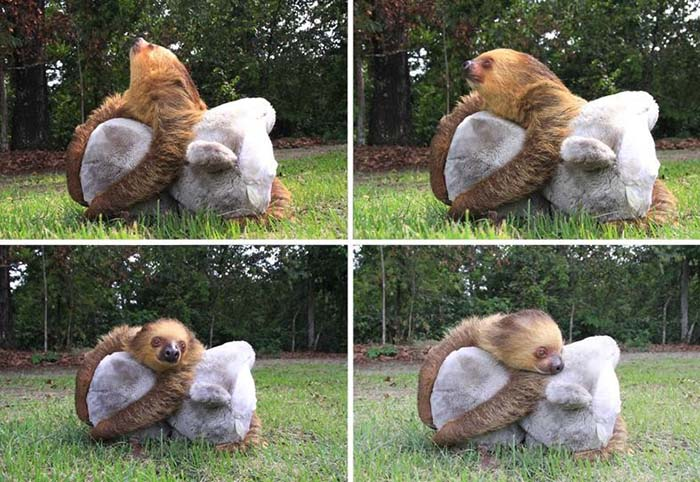 bebés huérfanos con animales de peluche