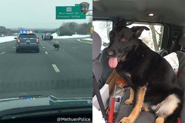 detienen el tráfico para ayudar a un perro